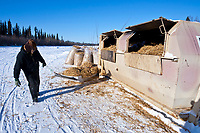 Volunteer Andrew Huntington hauls used straw to a burn dumpster at the Galena checkpoint during the 2010 Iditarod