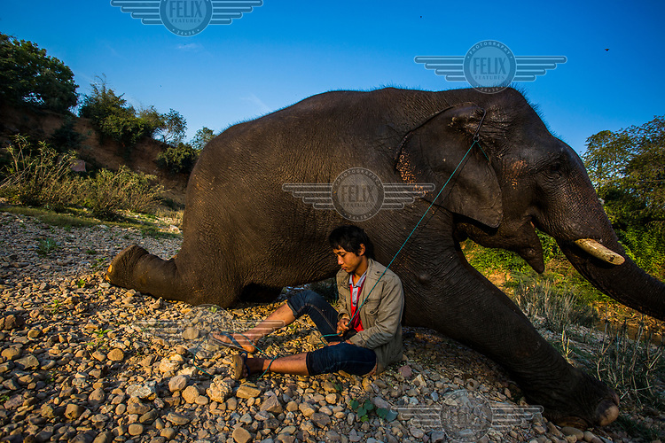 18-year-old elephant Pho Khwar and his mahout of same age Kalu Say  rest by the river.