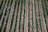 Europe/France/Aquitaine/33/Gironde/Sauternais/Sauternes: Vignes au chateau Guiraud (Vue aérienne)
