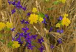 Wildflowers, Turkey