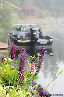 Lupins and Lund Boat in front of camp