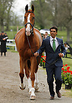 LEXINGTON, KY - APRIL 27: #24 Muggle and Nilson Moreira da Silva jog before the vets and grand jury during the first horse inspection for the Rolex Three Day Event on Wednesday April 27, 2016 in Lexington, Kentucky. (Photo by Candice Chavez/Eclipse Sportswire/Getty Images)