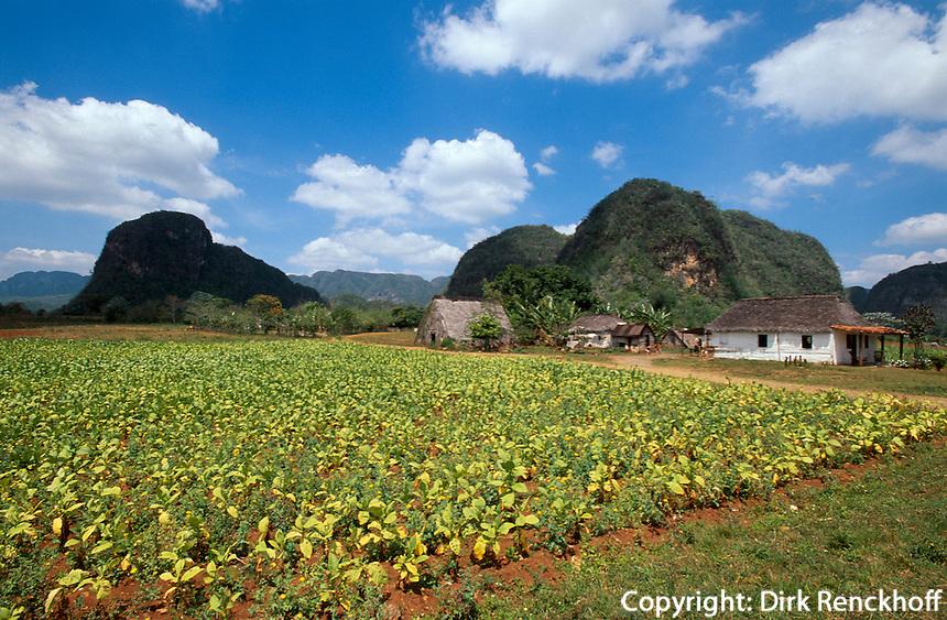Cuba, Mogotes (Kalkberge) Tabak-Felder im Valle de Vinales, Provinz Pinar del Rio, Unesco-Weltkulturerbe
