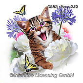Howard, REALISTIC ANIMALS, REALISTISCHE TIERE, ANIMALES REALISTICOS, paintings+++++Selfie Kitten,GBHRPROV222,#a#, EVERYDAY ,selfies