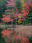 Fall colors line Eagle Lake during autumn in Acadia National Park, Maine, USA