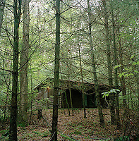Cabin in the woods<br />