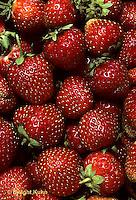 ST04-012e  Strawberries - Sparkle variety