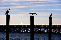 Birds are silhouetted on a deck in Charleston, SC.