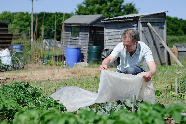 Fleecing cabbage