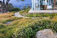 Path through California native plant garden with Carex pansa lawn (Pacific dune sedge), Santa Barbara,
