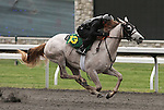 April 03, 2014: Hip 13 Mizzen Mast - Mrs. Marcos consigned by Wavertree Stables worked 1/8 in 10:2.  Candice Chavez/ESW/CSM