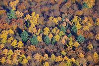 Sachsenwald im Indian Summer: EUROPA, DEUTSCHLAND, SCHLESWIG- HOLSTEIN, (GERMANY), 09.11.2014: Sachsenwald im Indian Summer, Mischwald aus Nadel und Laubwald,