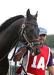 September 21, 2013.  Pennsylvania Derby contender Romansh, trained by Tom Albertrani, enters the paddock before the race. Will Take Charge, trained by D. Wayne Lukas and ridden by Luis Saez, wins the Pennsylvania Derby at  Parx Racing, Bensalem, PA.  ©Joan Fairman Kanes/Eclipse Sportswire