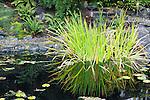 Man Made Pond in Garden.  Private garden.