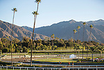 ARCADIA, CA - NOV 03: Horses run on the track during morning workouts at Santa Anita Park on November 3, 2016 in Arcadia, California. (Photo by Doug Engle/Eclipse Sportswire/Breeders Cup)