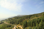 Naftali Mountains Forest scenic road