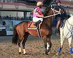 Vegas No Show post parade.  Favorite Vyjack with Cornelio Velasquez holds off 41 - 1 longshot Siete de Oros to win143rd running of the Grade II Jerome Stakes for 3-year olds, going 1 mile 70 yards on the inner dirt, at Aqueduct Racetrack.  Trainer Rudy Rodriguez.  Owner Pick Six Racing **