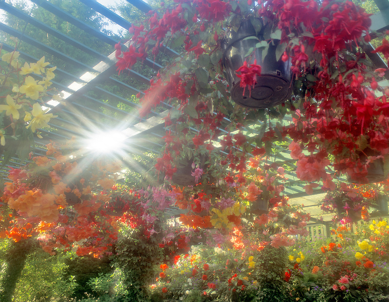 Potted flowers and sunburst. Butchart Gardens. Victoria, British Columbia, Canada.