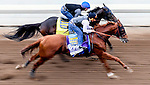 Dortmund, owned by Kaleem Shah, Inc and trained by Bob Baffert, exercises in preparation for the Breeders' Cup Las Vegas Dirt Mile