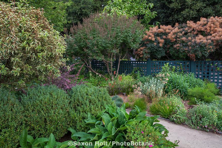 Gamble Garden, Palo Alto, California; Large shrubs L-R, variegated weigela, Weigela florida 'Variegata', chaste tree, Vitex agnus-castus and smoke tree, Cotinus coggygria looking over the Pollinator Garden