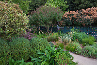 Gamble Garden, Palo Alto, California; Large shrubs L-R, variegated weigela, Weigela florida 'Variegata', chaste tree, Vitex agnus-castus and smoke tree, Cotinus coggygria looking over the Pollinator Garden