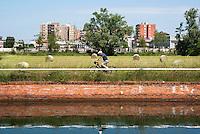Pista ciclabile lungo il Naviglio Grande e un campo con balle di fieno presso Gaggiano (provincia di Milano) nel Parco agricolo Sud --- Bicycle path along the Naviglio Grande canal and a field with hay bales near Gaggiano (province of Milan) in the Rural Park South