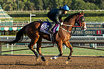 ARCADIA, CA  OCTOBER 30:  Breeders' Cup Dirt Mile entrant Blue Chipper, trained by Kim Young Kwan, exercises in preparation for the Breeders' Cup World Championships at Santa Anita Park in Arcadia, California on October 30, 2019. (Photo by Casey Phillips/Eclipse Sportswire/CSM)