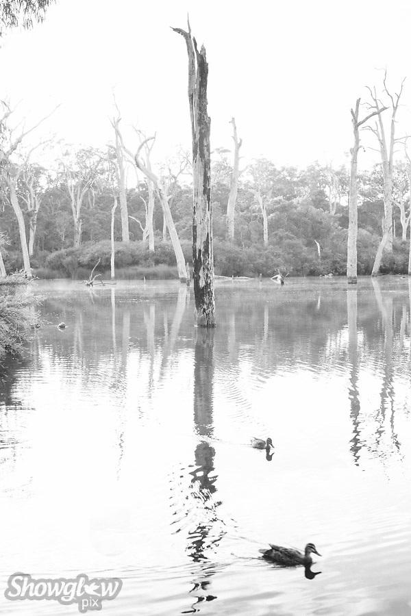 Image Ref: CA343<br /> Location: Margaret River<br /> Date: 13 Jan 2016