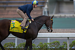 DEC 12,2015: Green Mask ,trained by Wesley Ward,ridden by Florent Geroux,exercises in preparation for the Hong Kong Sprint at Sha Tin in New Territories,Hong Kong. Kazushi Ishida/ESW/CSM