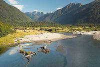 Cattle farming around Mahitahi River in South Westland, West Coast, UNESCO World Heritage Area, New Zealand, NZ