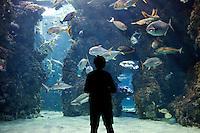 The Shark Lagoon, Musée Océanographique, Monaco, 5 July 2013