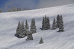 Ski Tracks, Vail Back Bowls, Vail Si Area, still life, winter still life, background, pattern snow patter, winter, snow still life, still-life,