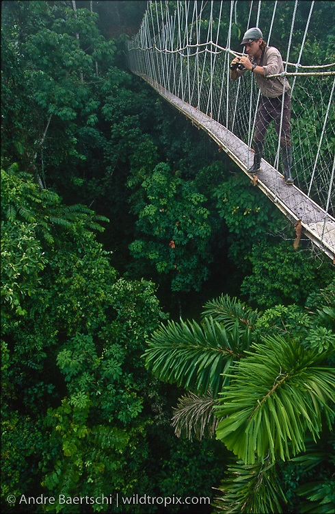 Wildlife Photographer André Baertschi on canopy walkway in lowland tropical rainforest, Rio Amigos Conservation Concession, Madre de Dios, Peru.
