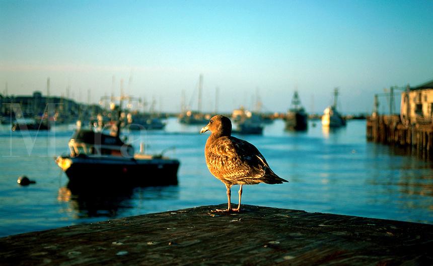 Seabird on harbor dock.