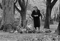 ARCHIVE -<br /> <br /> Dame agee nourissant les pigeons dans un parc, problament Outremont, <br /> Octobre 1973<br /> <br /> <br /> Photo : Agence Quebec Presse  - Alain Renaud