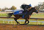 Donjah, trained by trainer Henk Grewe, exercises in preparation for the Breeders' Cup Turf at Keeneland Racetrack in Lexington, Kentucky on November 5, 2020.