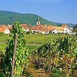 Germany, Rhineland-Palatinate, Frankweiler: Wine-Village along German Wine Route (autumn) | Deutschland, Rheinland-Pfalz, Suedliche Weinstrasse, Frankweiler: Weinort an der Deutschen Weinstrasse