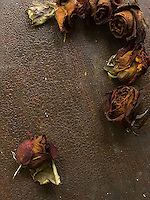 Dried roses on dark wood background<br />