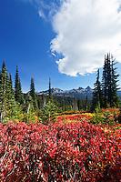 Autumn colored subalpine meadow, Paradise Meadows, Mount Rainier National Park, Washington, USA