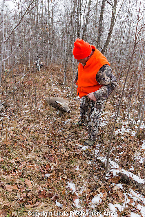 Wisconsin hunter dragging a white-tailed buck