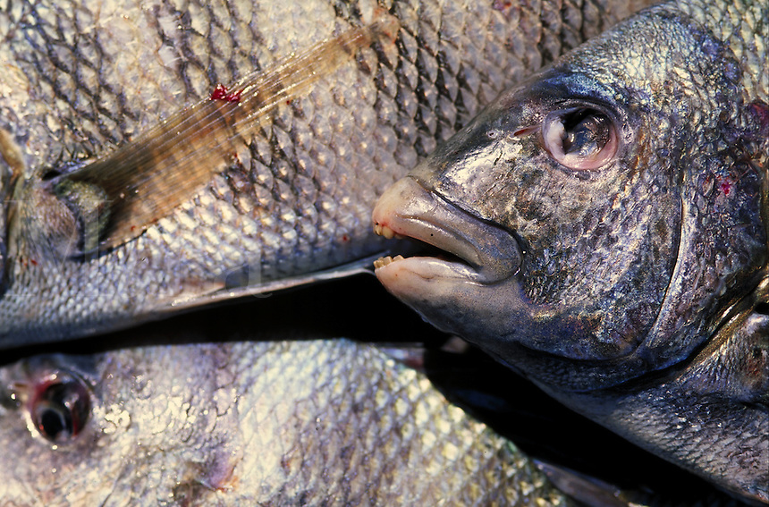 detail of fresh fish