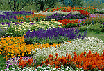 2974-EU Annual Beds at Minnesota Landscape Arboretum, Chanhassen, Minnesota