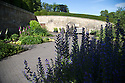 07/07/15<br /> <br /> Ironweed or Bluebottle/Echium vulgare which can cause a slow death from liver damage in foreground.<br /> <br /> The Poison Garden, Alnwick Garden.<br /> <br /> All Rights Reserved: F Stop Press Ltd. +44(0)1335 418629   www.fstoppress.com.