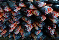 Fish Heads/Fish Morning Market in Hpa An, Myanmar, Burma