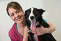 06/01/16<br /> <br /> Veterinary Nurse Nikola Capell-Turner with Holly at the PDSA Pet Hospital in Leicester.<br /> <br /> Holly is an 18-month-old Border Collie who was brought into PDSA's Leicester Pet Hospital suffering with acute peritonitis. Her chances of survival were as low as 1 in 10 but thanks to the tireless efforts of staff and three life-saving operations, Holly pulled through and is on the road to making a full recovery. Mr and Mrs Gray are extremely grateful for the care given by PDSA and their son Tim has even started a fundraising challenge – a dryathlon in January – to raise money for the charity.<br /> <br /> All Rights Reserved: F Stop Press Ltd. +44(0)1335 418365   +44 (0)7765 242650 www.fstoppress.com
