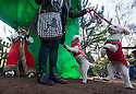 """18/12/16<br /> <br /> Miniature Poodles Pickle and Punchy with owner Rebecca Goddard.<br /> <br /> Close to 800 dogs, many of them dressed up in festive garb, have visited their very own Santa Paws in a special dog-only Christmas grotto held in Sherwood Forest in Nottinghamshire this weekend.<br /> The two-day event, which was organised by park rangers working for Nottinghamshire County Council, has been running for three years.<br /> Ranger Graeme Turner, who originally came up with the idea for a doggy-themed Santa's Grotto said this year has been the best so far.<br /> """"The queue is huge, it snakes back all the way round the visitor's centre,"""" he said. """"All the dogs are being very well behaved, I guess they don't want to get onto Santa Paw's naughty list this close to Christmas!""""<br /> All canine visitors to the grotto got a special doggy bag full of treats and money raised from the event will go to Jerry Green Dog Rescue charity.<br /> <br /> All Rights Reserved F Stop Press Ltd. (0)1773 550665   www.fstoppress.com"""