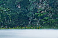 Fog and blooming wildflowers on Wilber Lake (TVA), Cherokee National Forest