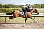 #87Fasig-Tipton Florida Sale,Under Tack Show. Palm Meadows Florida 03-23-2012 Arron Haggart/Eclipse Sportswire.