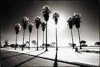Silhouetted Palm Trees with long shadows<br />
