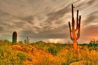 Full Moon Lightning - Arizona